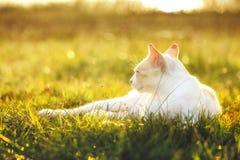 Primo piano del fronte del gatto Fotografie Stock