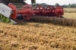 Campo di agricoltura del frumento del raccolto dell'associazione del primo piano Immagini Stock