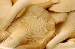 Primo piano del fungo immagini stock