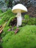 Primo piano del fungo selvaggio Fotografia Stock