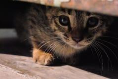 Primo piano del gattino Immagine Stock