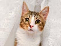 Primo piano del gattino Fotografia Stock