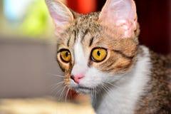Primo piano del gattino Fotografia Stock Libera da Diritti