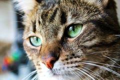 Primo piano del gatto fotografia stock
