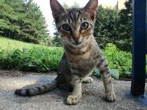Primo piano del gatto del bambino fotografia stock libera da diritti