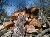 Primo piano del gatto che dorme sui firewoods Fotografie Stock Libere da Diritti