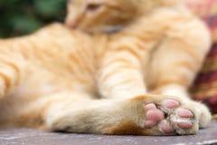 Primo piano del gatto delle zampe Immagine Stock
