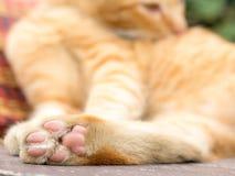 Primo piano del gatto delle zampe e fondo vago Fotografia Stock