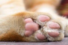 Primo piano del gatto delle zampe e fondo vago Immagini Stock Libere da Diritti