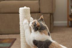 Primo piano del gatto facendo uso della posta di scratch Fotografie Stock Libere da Diritti