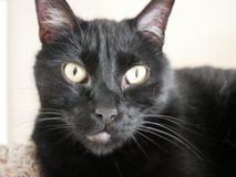 Primo piano del gatto nero immagine stock