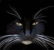 Primo piano del gatto nero Immagini Stock