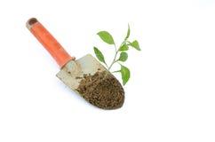 Primo piano del giardiniere che pianta l'albero Fotografia Stock