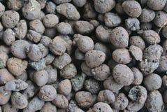 Primo piano del granello del fertilizzante organico Immagine Stock