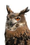 Primo piano del gufo dell'uccello fotografia stock