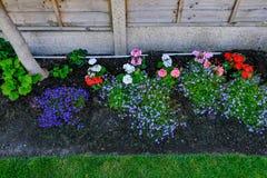 Primo piano del letto di fiore con le piante floreali da aiuola di inizio dell'estate Fotografie Stock Libere da Diritti