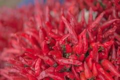 Primo piano del mazzo rosso secco dei peperoncini Fotografie Stock