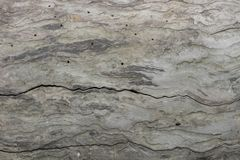 Primo piano del pezzo di corteccia che è stata mangiata dallo scarabeo di corteccia Immagini Stock
