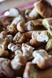 Primo piano del raccolto del fungo Fotografia Stock Libera da Diritti