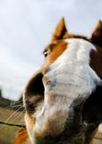 Primo piano del radiatore anteriore del cavallo Immagini Stock Libere da Diritti