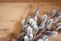 Primo piano del ramo del salice purulento sul fondo di legno di colore medio, vista superiore, umore della molla, spazio vuoto Fotografia Stock