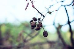 Primo piano del ramo di autunno fotografie stock