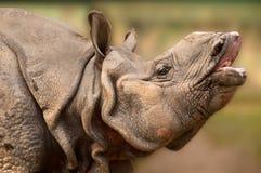 Primo piano del rinoceronte fotografie stock