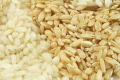 Primo piano del riso Fotografie Stock