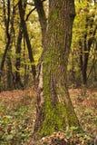 Primo piano del tronco di albero fotografie stock