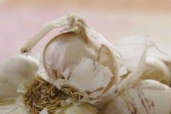 Primo piano dell'aglio Fotografie Stock Libere da Diritti