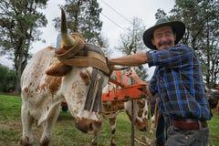 Primo piano dell'agricoltore di Tico in Costa Rica Immagine Stock Libera da Diritti
