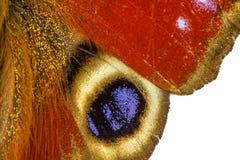 Primo piano dell'ala della farfalla su un fondo bianco Fotografie Stock Libere da Diritti