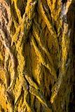 Primo piano dell'albero alla luce di mattina Fotografia Stock