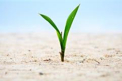 Primo piano dell'albero del bambino sulla sabbia Immagine Stock