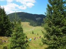 Primo piano dell'albero del paesaggio della montagna Immagini Stock