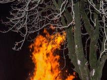 Primo piano dell'albero nudo e fuoco di accampamento con le alte fiamme Immagine Stock Libera da Diritti