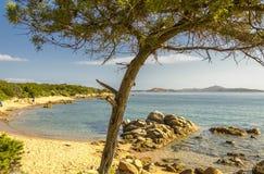 Primo piano dell'albero su una spiaggia a Palau Sardegna, Italia immagini stock libere da diritti