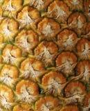 Primo piano dell'ananas del dettaglio Fotografia Stock