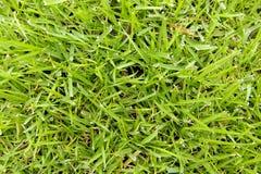 Primo piano dell'erba Immagine Stock Libera da Diritti