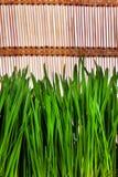 Primo piano dell'erba Immagini Stock Libere da Diritti