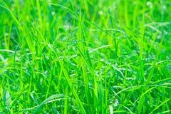 Primo piano dell'erba Fotografie Stock Libere da Diritti