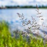 Primo piano dell'erba alla riva del fiume immagine stock libera da diritti