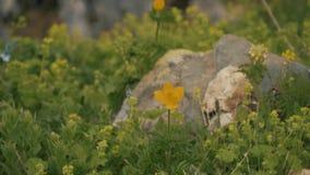 Primo piano dell'erba della montagna con luce solare Bello paesaggio della natura con un chiarore solare video d archivio