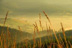 Primo piano dell'erba di tramonto Immagini Stock Libere da Diritti