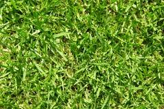 Primo piano dell'erba verde Fotografia Stock Libera da Diritti