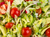 Primo piano dell'insalata Fotografia Stock