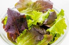 Primo piano dell'insalata mista Fotografia Stock