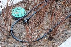 Primo piano dell'irrigazione a goccia Tubo dell'irrigazione a goccia in piante decorative Immagini Stock Libere da Diritti