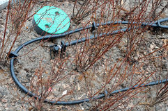 Primo piano dell'irrigazione a goccia Tubo dell'irrigazione a goccia in piante decorative Fotografie Stock Libere da Diritti