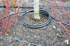 Primo piano dell'irrigazione a goccia Tubo dell'irrigazione a goccia in piante decorative Fotografia Stock Libera da Diritti